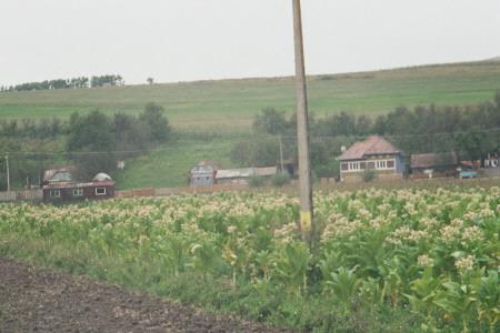 rumanien2007_47.jpg