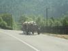 Sådanne transporter ser man den dag i dag på vejene i Rumænien.